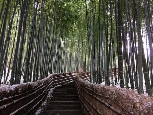 化野念仏寺_竹の小径