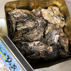 小浜湾の牡蠣