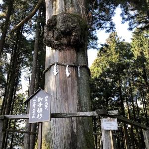 日蓮お手植え杉